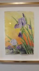 Trädgårdsiris   Akvarell