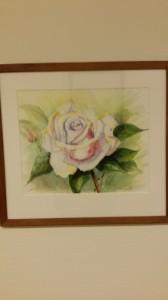 Ros, ljusrosa   Akvarell