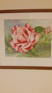Ros, rosa   Akvarell